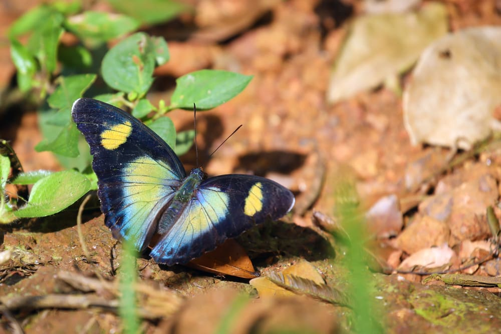 Interesting facts about Ghana include its butterflies