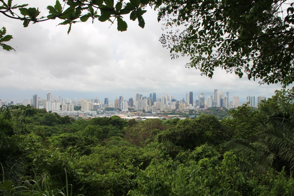 The rainforest in the capital city