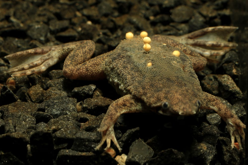 Suriname is home to many unusual species