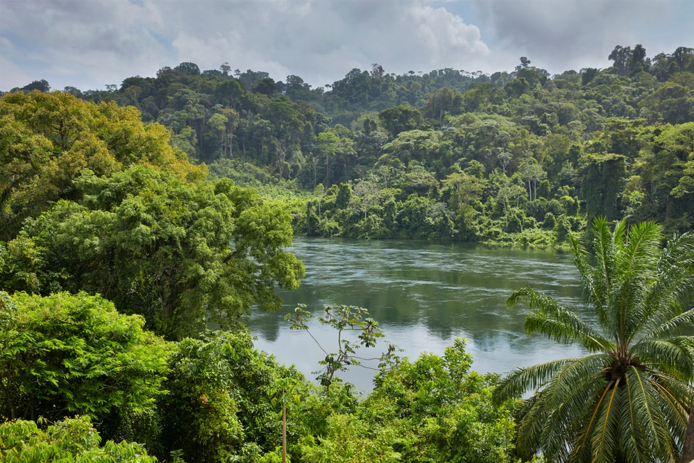 Huge areas of Surinam are covered in rainforest