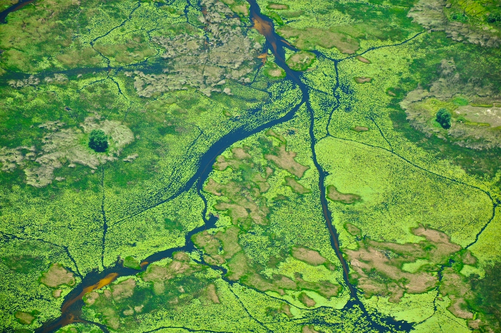 The Okavango Delta accounts for several interesting facts about Botswana