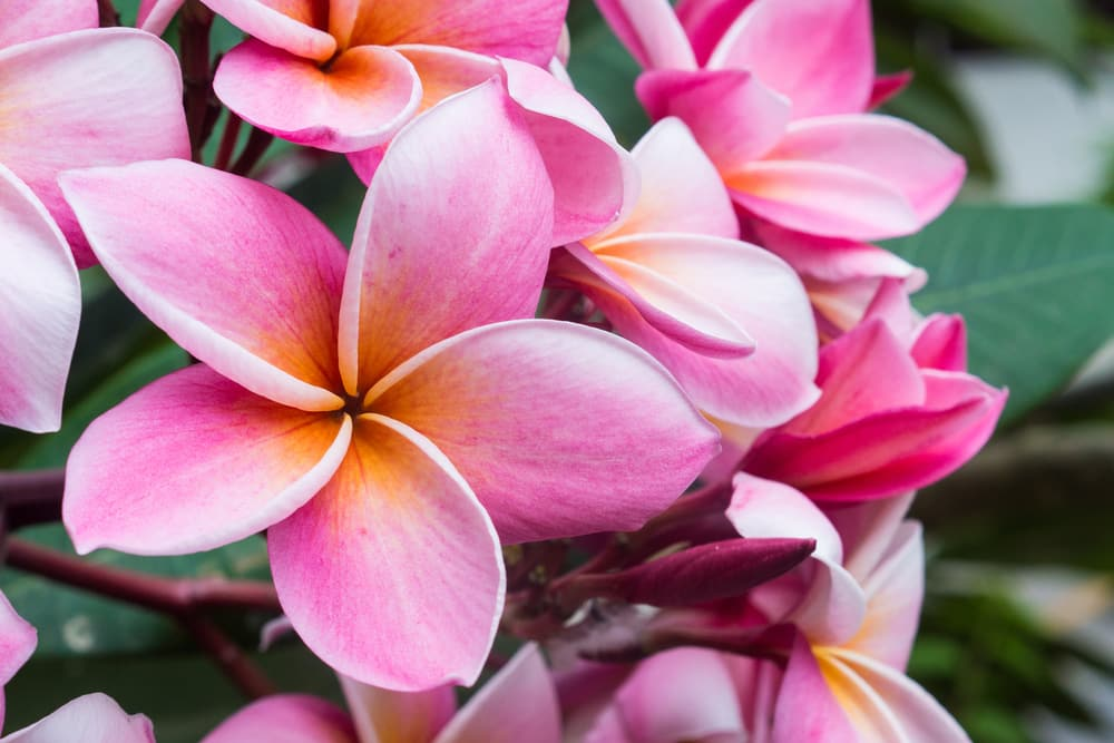 facts about fiji: 800 species of plants can be found only in Fiji