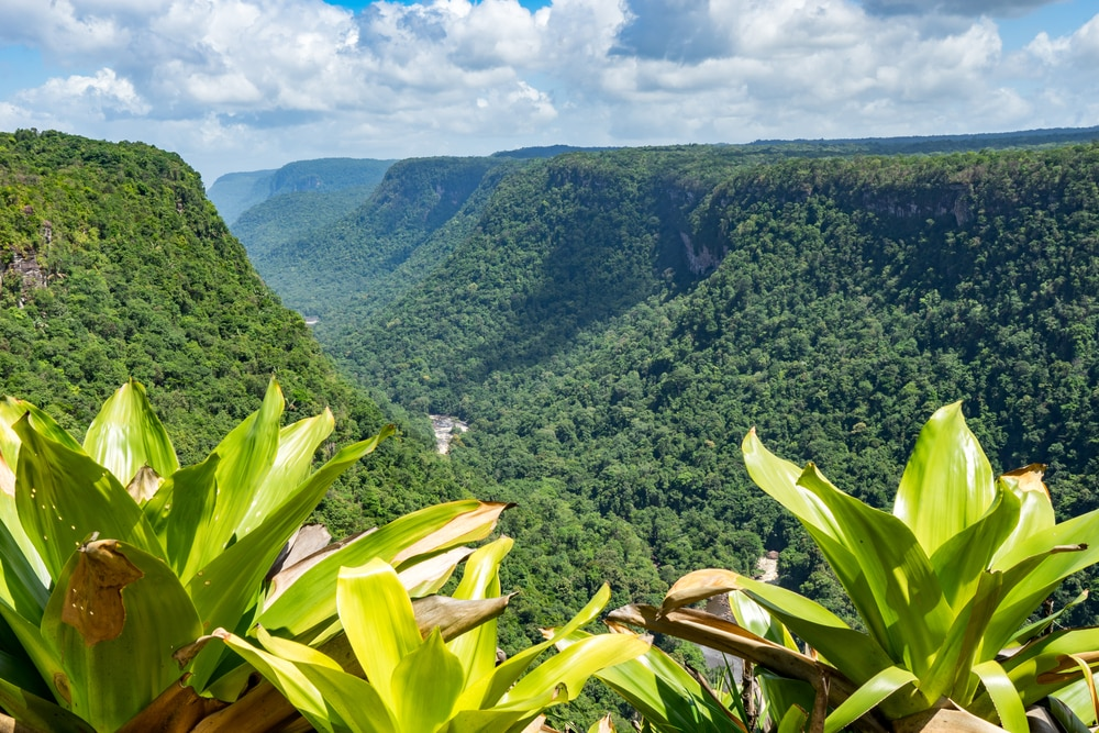 Forests in Guyana contain several interesting facts