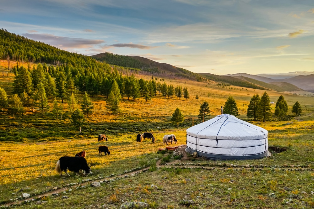 A traditional Mongolian yurt (ger)