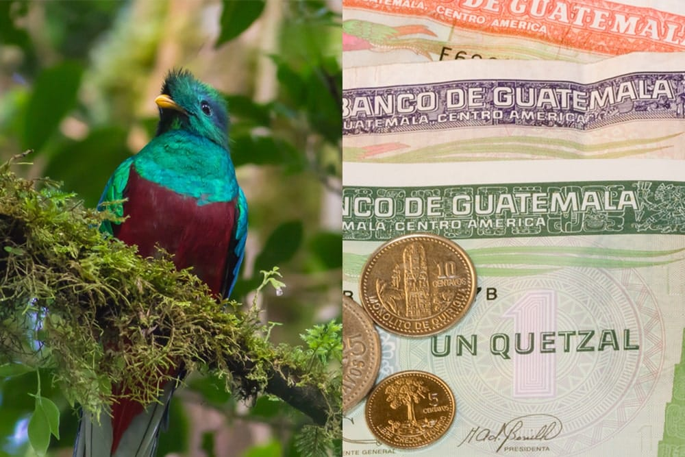 Guatemala's national bird and currency