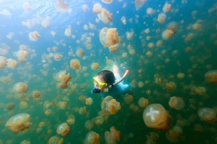 Jellyfish Lake is filled with millions of jellyfish
