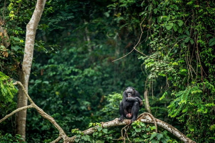 Interesting facts about the Democratic Republic of Congo include its magnificent biodiversity