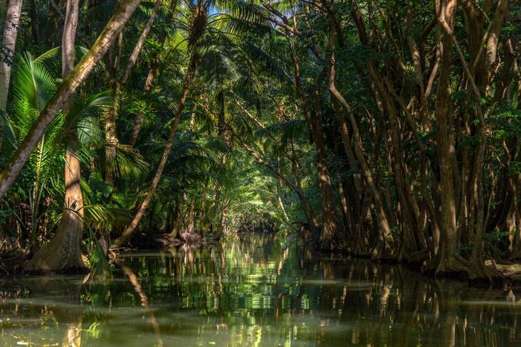 A river running through rainforest