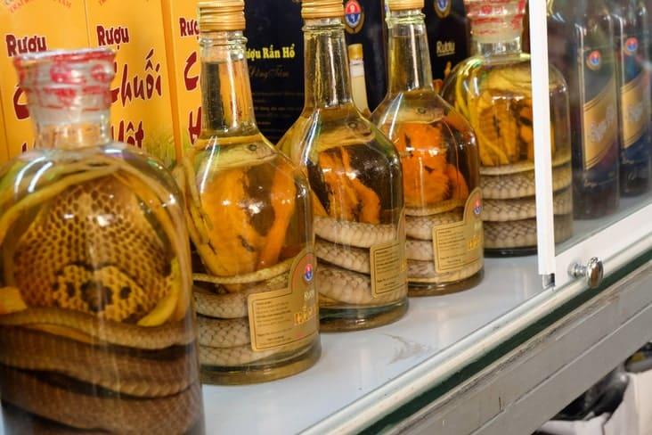 Bottles of snake wine in Vietnam