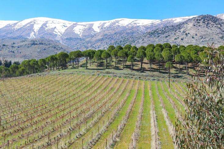 Vineyards in Lebanon