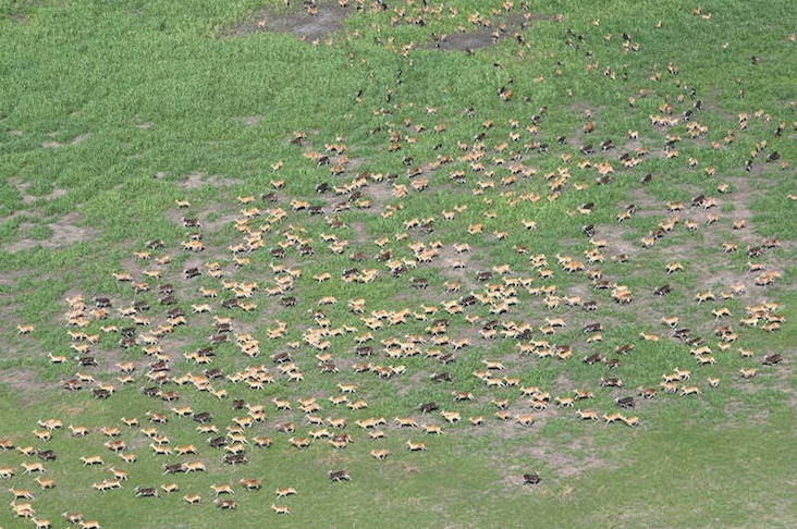 Migrating animals in Boma National Park