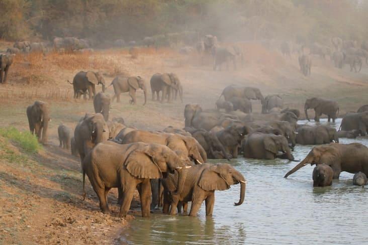 Elephants in Zakouma National Park