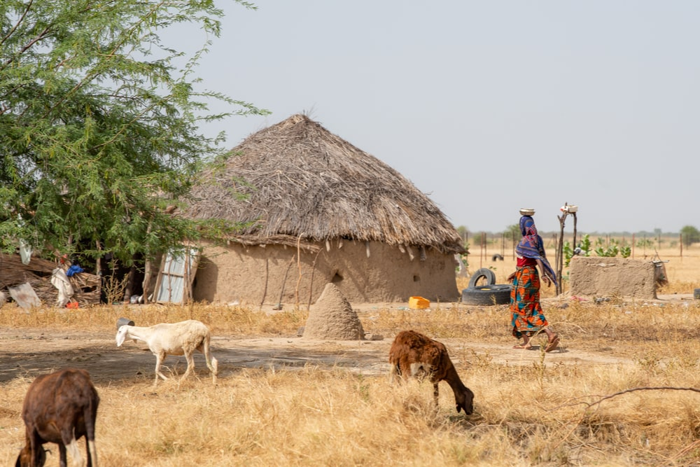 Farm houses in Chad