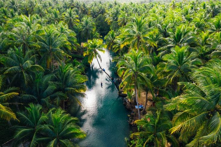 The Filipino jungle