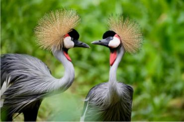 27 interesting facts about Uganda