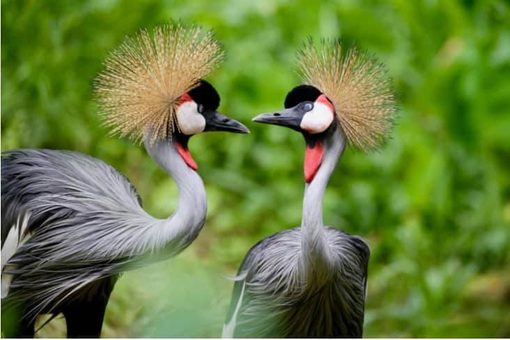 Interesting facts about Uganda include its wide range of natural wonders