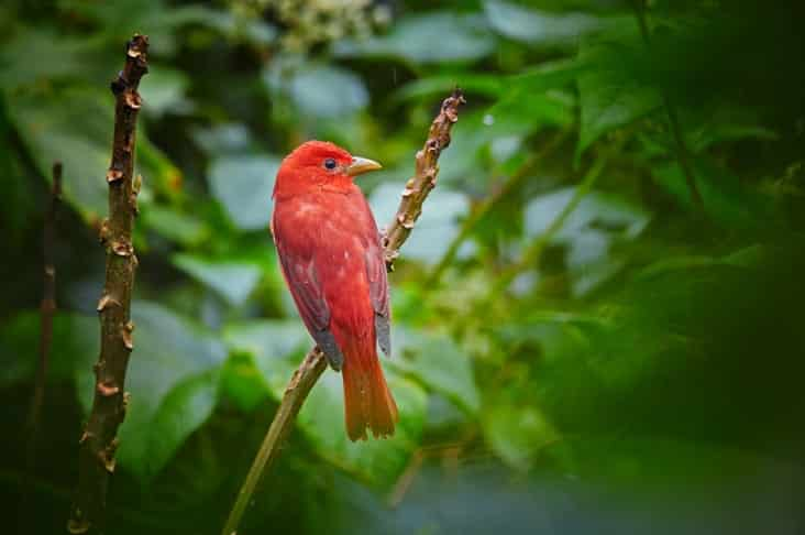 A hummingbird in Trinidad and Tobago