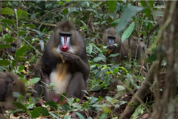 Interesting facts about Gabon include its diverse wildlife