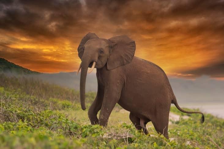 An elephant in Loango National Park