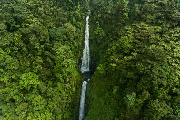 interesting facts about Equatorial Guinea rainforest