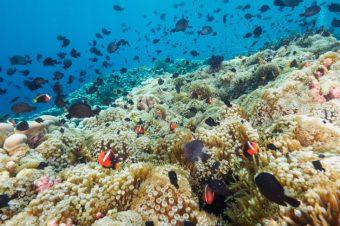 24 interesting facts about East Timor (Timor-Leste)