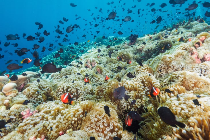 Colourful marine life in East Timor