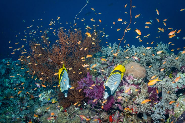 Coloured fish and reefs in the Sanganeb Marine National Park