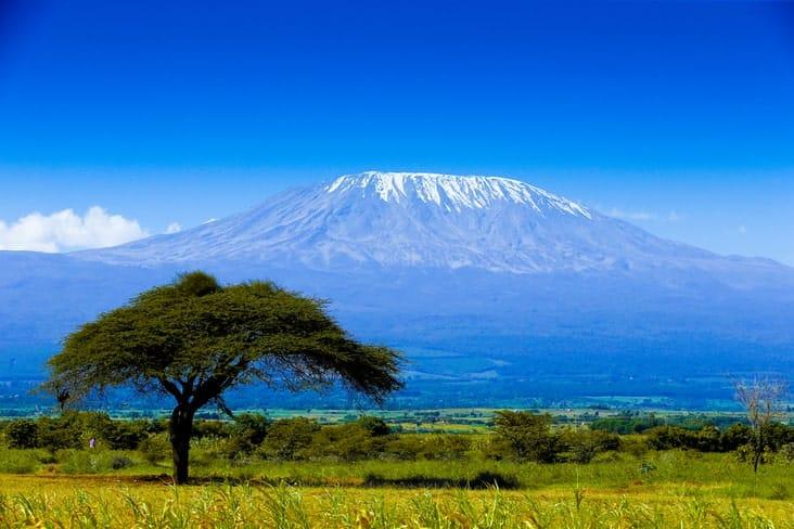 Mount Kilimanjaro towering above a tree