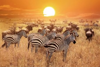 26 interesting facts about Tanzania