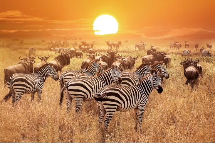 Interesting facts about Tanzania include its remarkable wildlife