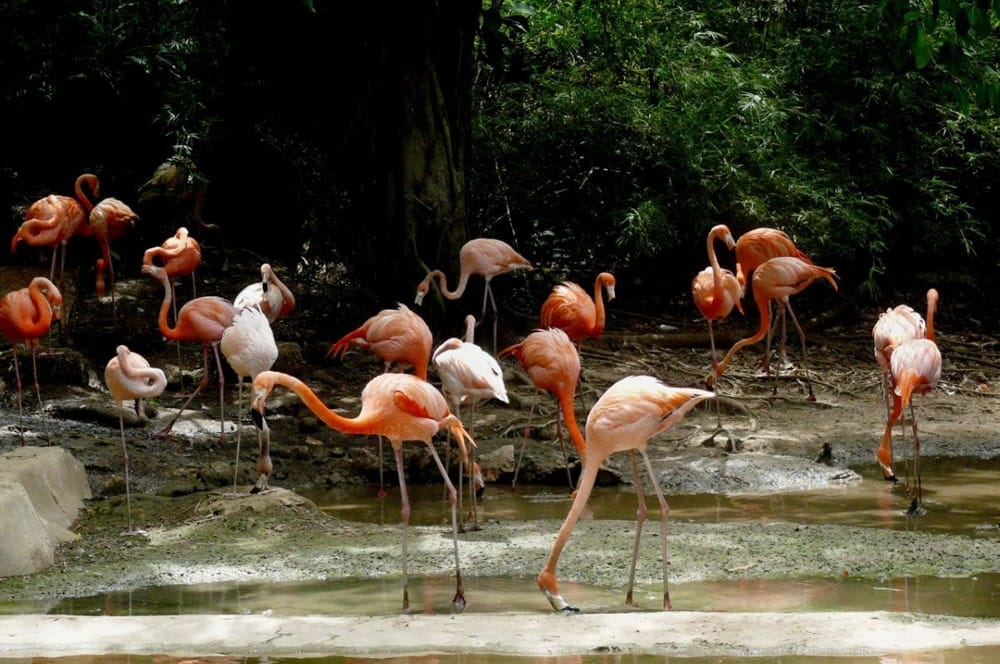 Flamingoes in the Dominican Republic